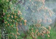 花粉症で目元の肌荒れと腫れへの対策とは