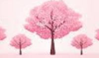 桜の花見の写真撮影のコツは?初心者でもきれいに撮影