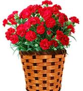 母の日のプレゼントでカーネーション以外の花で人気なのは?