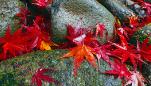 秋に親子で楽しむ遊び場のオススメスポット